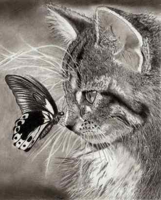 cat_by_teszu