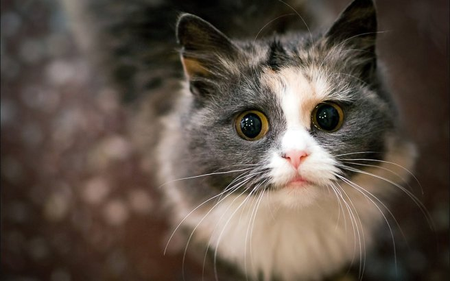 cute_cat_by_reasondinn-d5r8hde